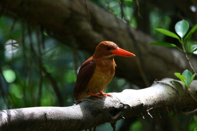 Rubbykingfisher